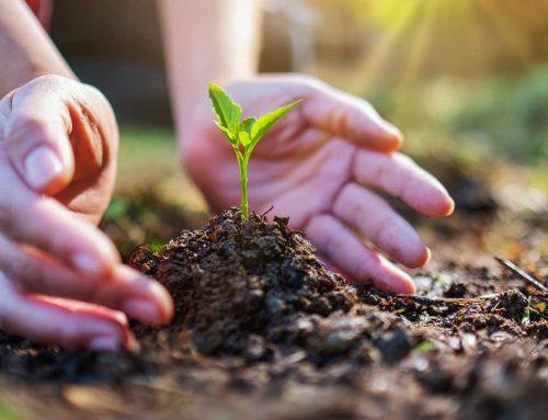 Informe sobre la Ley de Educación Ambiental